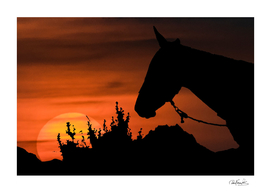 sunset-scene-with-horse-silhouette-illustration