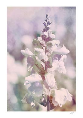 Soft Vintage Lupine