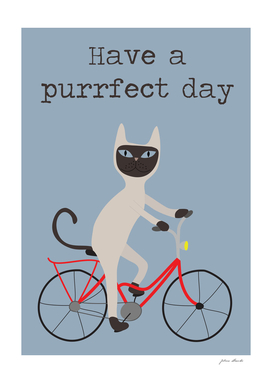 Siamese cat on bicycle