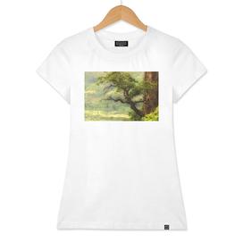 Nature mountain sunrise landscape tree