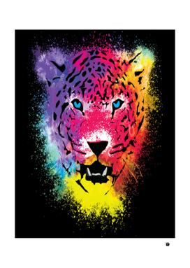 rainbow bigcat