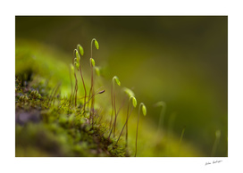 green moss close-up