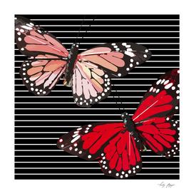 Butterflies Black White Stripes