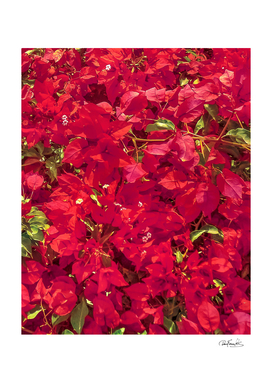 Red Flowers Pattern Photo