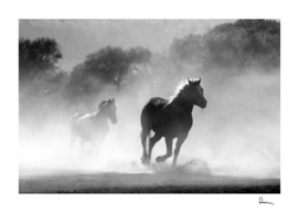 horse herd dust nature wild