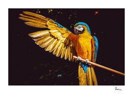 ara parrot yellow macaw bird