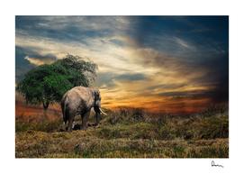 elephant mammal safari animal one