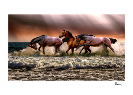 animal horses fauna nature cavalry