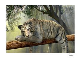 tiger animal jungle rainforest