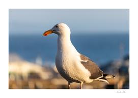 Sea Gull Side View near Los Angeles Beach