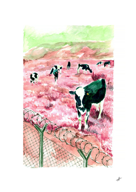 Cows behind the barbed wire