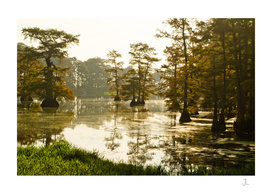 Arkansas Swamp