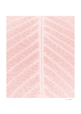 Blush pink leaf close-up