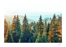 Pine Beauty