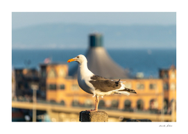 Side View of Seagull sitting on a post
