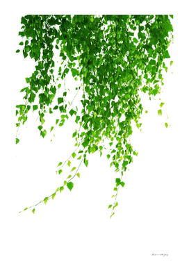Green Leaves Delight #1 #tropical #decor #art