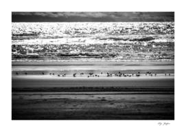 Shoreline Plovers