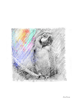 Parrot: classic sketch, pastel drawing, colorful