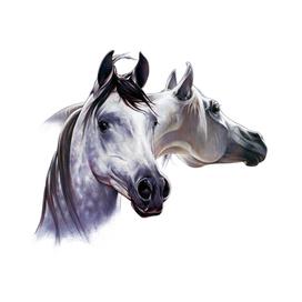 Arabian Pair