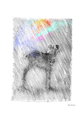 Zebra baby: classic sketch, pastel drawing, colorful