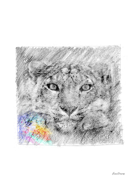 Snow Leopard: classic sketch, pastel drawing, colorful