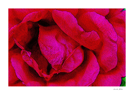 Painting of Blossoming Red Rose Petals