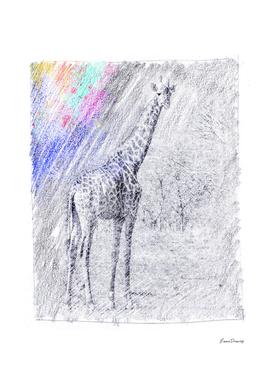 Giraffe: classic sketch, pastel drawing, colorful