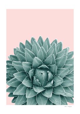 Blush Green Agave Chic #1 #succulent #decor #art