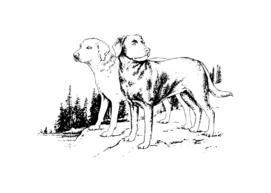 Hunting Labradors
