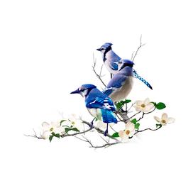Blue Jay Flowers
