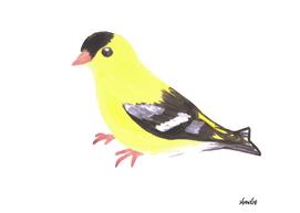 American goldfinch or Spinus tristis bird