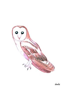 Barn owl or Tyto alba wild bird