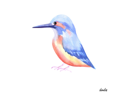 Common Kingfisher or Alcedinidae bird
