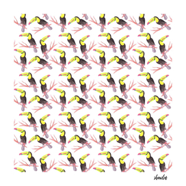 Keel billed toucan birds watercolor