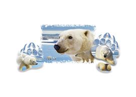Window Art-Polar bear