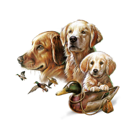Golden Retrievers/Duck Hunting