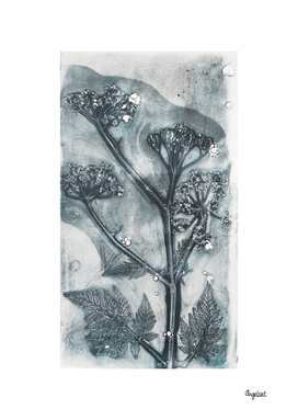 Botanical plants and flowers print, cow parsley