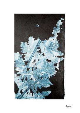 Botanic plants and flowers print, Fern