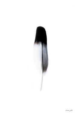 Spirit l
