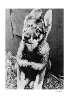 Vintage retro picture of a home dog