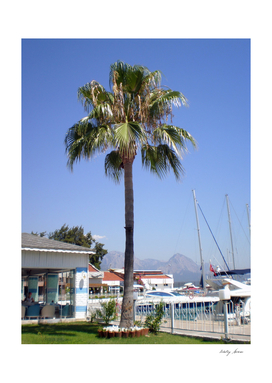 The territory of the yacht club Kemer with a palm and lawn