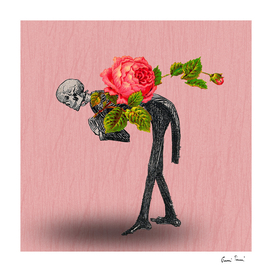 The unbearable lightness of the rose