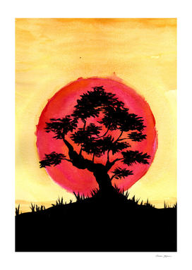 Bonsai Sunset