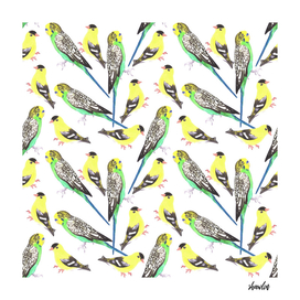 Budgies and american goldfinches birds