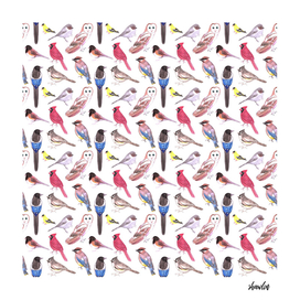 Wild birds watercolor- Birds of America