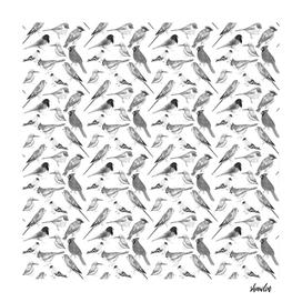 Black and white birds against white