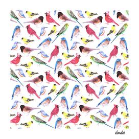 Colorful  birds in tetrad color scheme