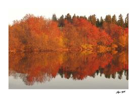 Lake reflection in autumn