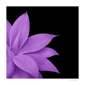 Agave Finesse #10 - Purple on Black #tropical #decor #art