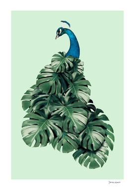 MONSTERA BIRD